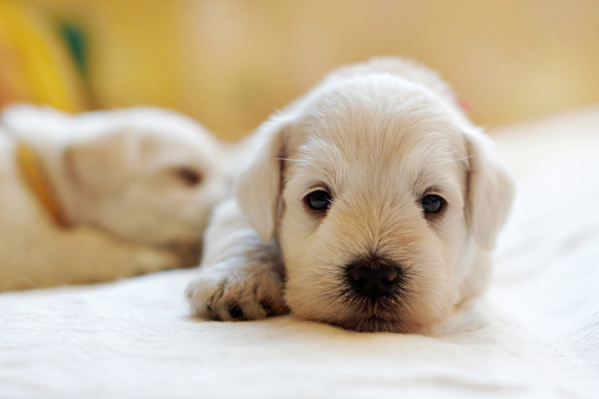 cachorro cuidados